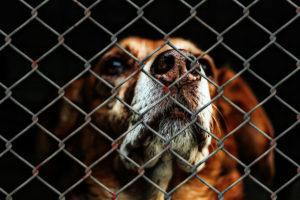 Le principe : un achat nourrit un animal abandonné