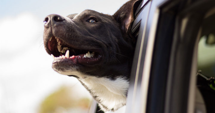 chien heureux